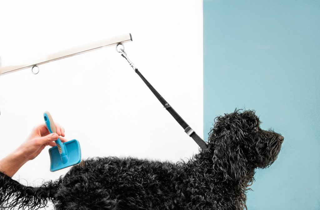 Ruff Mutts London Dog Grooming | Striking Places Photography